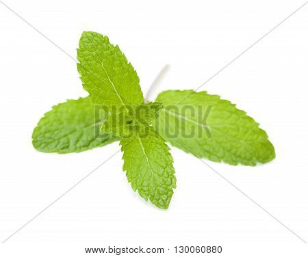 Sprigs Of Mint Isolated
