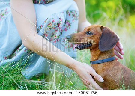 Red Smooth-haired Dachshund And Woman Outdoors