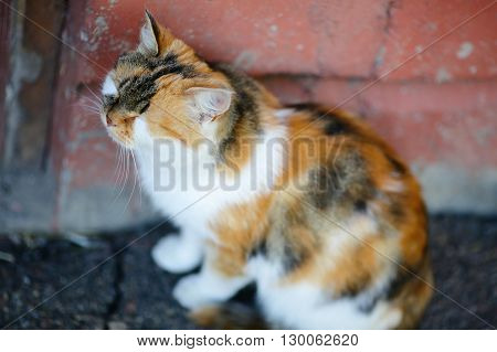 Cute Mixed Breed Cat Sitting And Sleeps Near The Red Wall