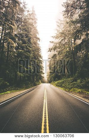 Redwood Forest Road Trip. California USA. Foggy road.