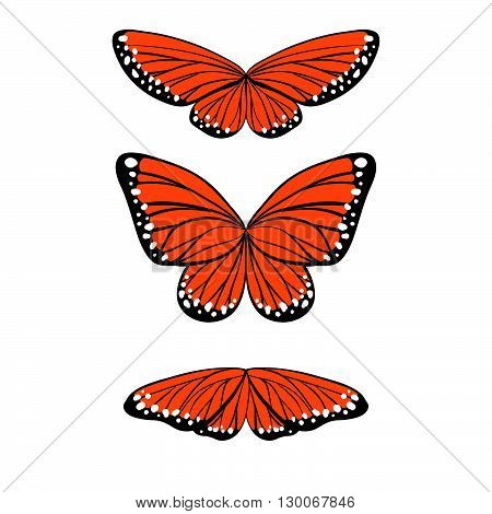 Set Of Butterflies In Orane, Black And White Colors In Different Poses