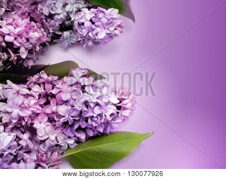 Photo of beautiful purple lilac with purple background