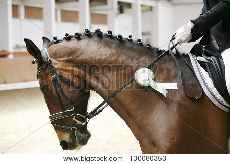 Award Winning Racehorse During Celebration With Unidentified Rider Indoors