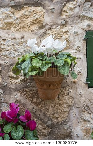 village, flowerpots street in the tourist island of Mallorca, Valdemosa city in Spain