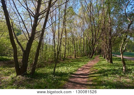 Walking on footpath in the morning in May. Yauza floodplain park in Moscow.