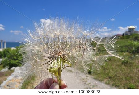 Dandelion in a hand blown away by the wind on a blurred background landscape