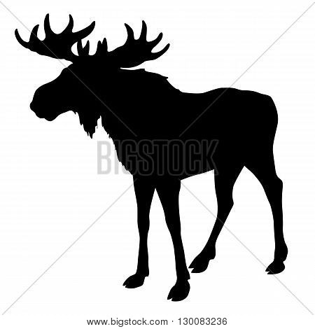 deer moose silhouette, black isolated vector illustration
