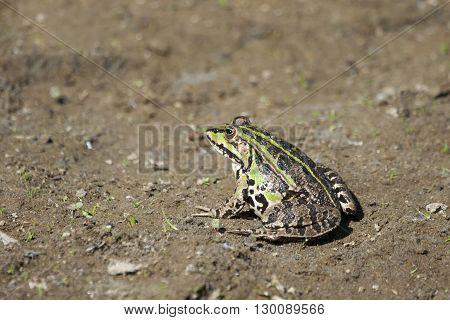 Green Fron On Ground