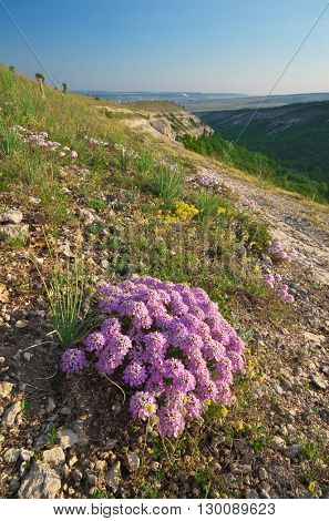 Flower in mountain. Nature composition.