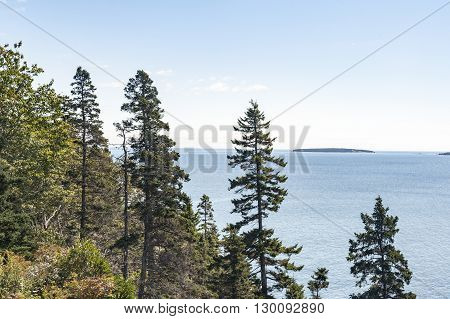 Tree-lined shore on the Gulf of Maine in Acadia National Park