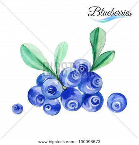 Watercolor fruit blueberries isolated on white background