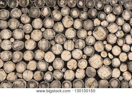 Tree stumps background. Ecologically clean floor or wall decoration of the tree stumps.