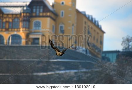 Castle Vetruse with bird in town Usti nad Labem