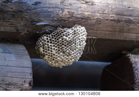 hornet's nest on the wall of a wooden house