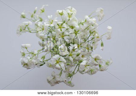 light spring white bouquet on white background