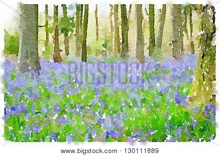 Digital watercolor painting of bluebell flowers in the woods.