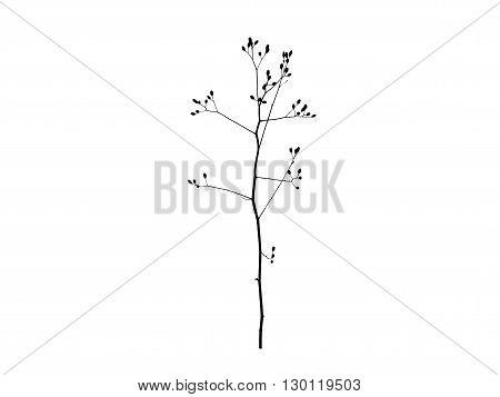 Sprig of tree on a white background nature minimalism black white isolate
