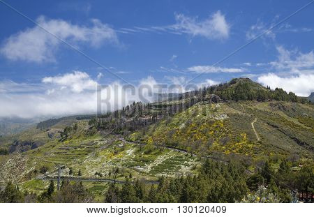 Inland Gran Canaria Canary Islands April Flowering slopes