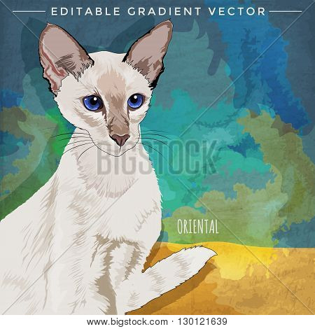 Oriental Shorthair. Vector illustration of a cat at home.