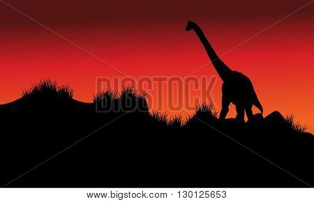 one brachiosaurus in fields at morning with red backgrounds