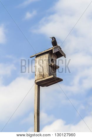 Starling took place in the spring birdhouse