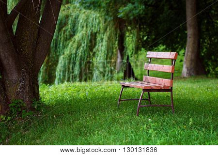 Lonely wooden bench covered with sunbeams is on the grass in shade under tree in park in summertime. Tinting image. Concept of loneliness and waiting