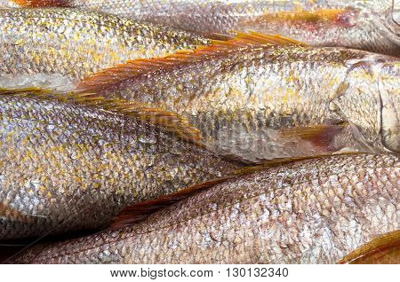Raw fish scales background. Nature patterns food textures
