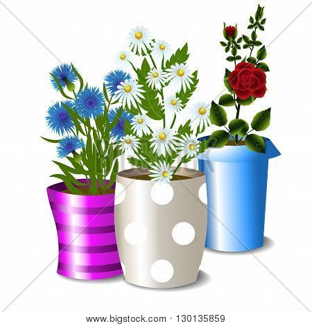 Three flower pots with roses, daisies, cornflowers and leaves isolated on white background, vector illustration