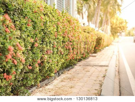 Sunset and Green leaf fence with walkway