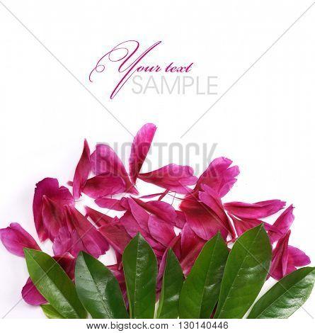Beauty peony petals