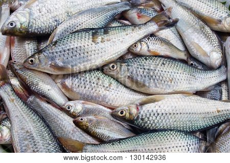 stack of fresh fish sell in market