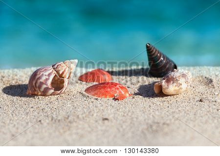 Natural sea shells and snails on beautiful tropical sandy beach.