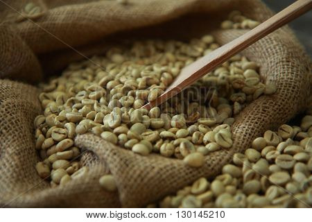 Raw coffee beans with wooden scoop in gunny sack