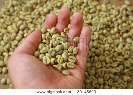 Hand showing raw coffee beans with blurred coffee beans on background