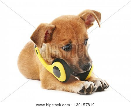 Puppy playing with headphones isolated on white