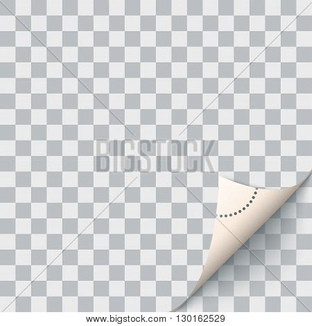 Curled corner. For your designs. Vector illustration. You can locate on any background.
