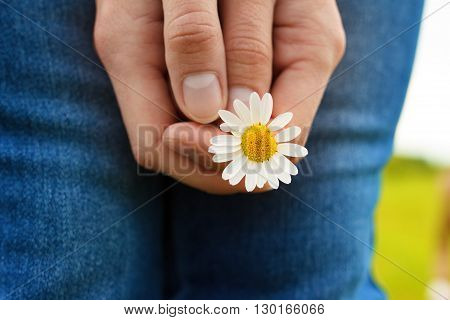 Girl dressed in jeans is holding a camomile flower at her lap in summer day. Close-up view