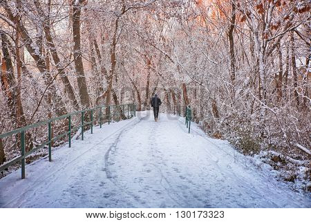 slow shutter speed of a man jogging down a snowy path in a local park with trees lining both sides (FOCUS ON THE PATH AND TREES)