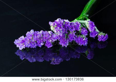 purple statice flower on a black background