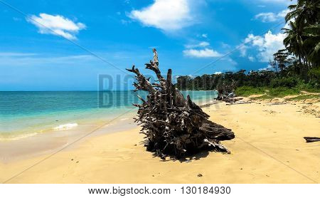 Driftwood on Wandoor Beach, Port Blair, Andaman and Nicobar Islands, India, Asia.