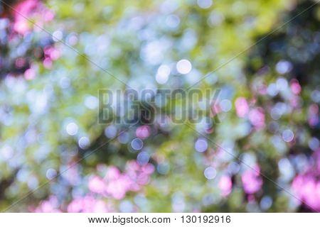 Wonderful Romantic Soft Pastel Violet Purple And Green Dreamy Fancy Bokeh Background