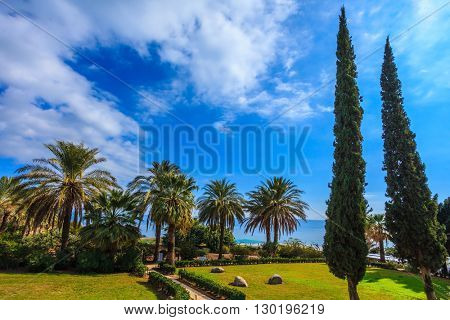 Subtle shade of palms and cypresses. The Middle East, Sea of Galilee
