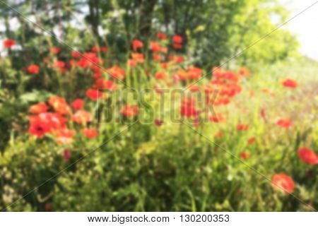 background of field with poppies and intentionally blur applied