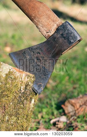 Firewood Splitting. Closeup of axe in log on summer nature background