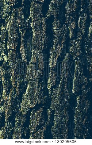Close up of tree bark, can be used as background