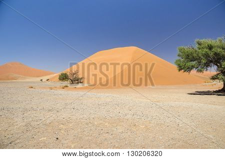 Dune 45 in Namib Desert in Namibia.