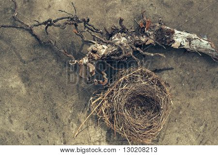Bird's nest and massive branch, spring object