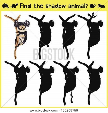 Children's developing game to find an appropriate shadow marsupial animal koalas on the tree. Vector illustration