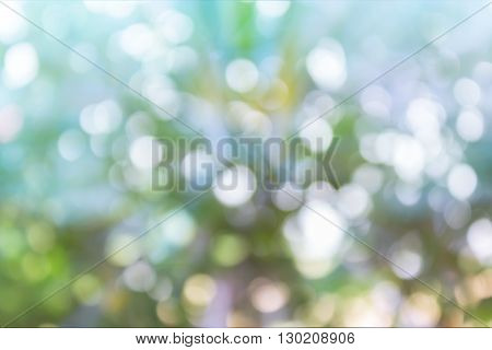 Wonderful Spark And Blow Natural Colourful Bokeh  In Wonderful Fantasy Mood Sweet Romantic Soft Past