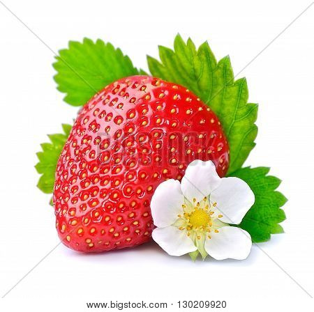 Single strawberry with white flowers on white background